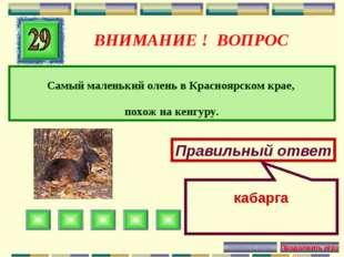 ВНИМАНИЕ ! ВОПРОС Самый маленький олень в Красноярском крае, похож на кенгуру