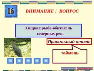 ВНИМАНИЕ ! ВОПРОС Хищная рыба-обитатель северных рек. Правильный ответ таймень