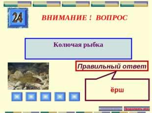 ВНИМАНИЕ ! ВОПРОС Колючая рыбка Правильный ответ ёрш