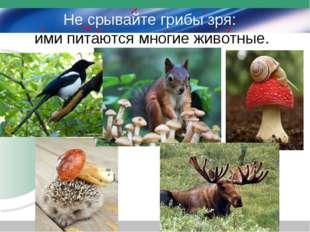 Не срывайте грибы зря: ими питаются многие животные.
