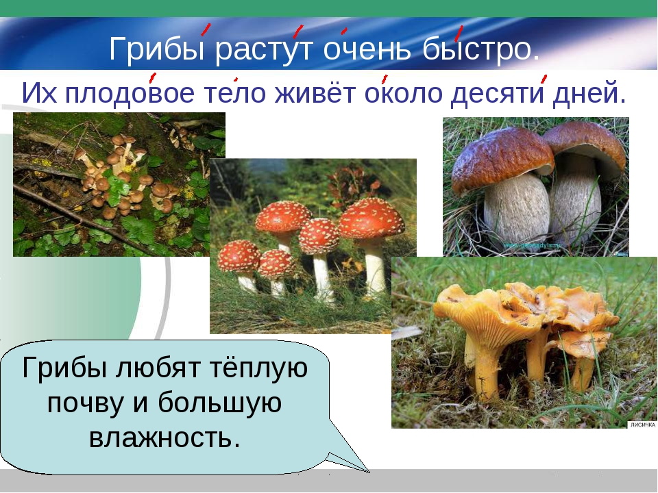 Грибы растут очень быстро. Их плодовое тело живёт около десяти дней. Какую по...