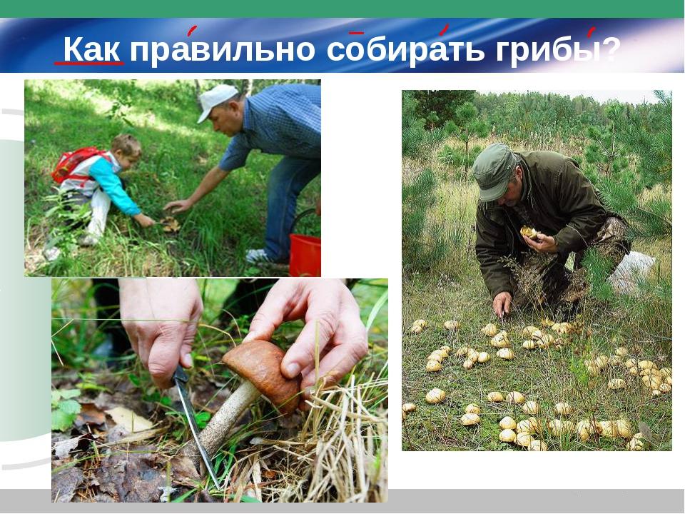 Как правильно собирать грибы?