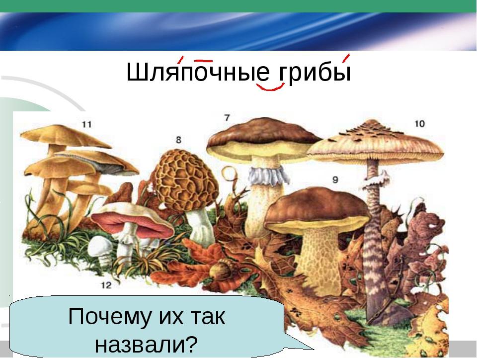 Шляпочные грибы Почему их так назвали?