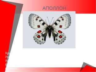 АПОЛЛОН Крупнейшая из древних бабочек. Обитает в Европейской части России, Се