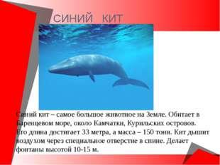 СИНИЙ КИТ Синий кит – самое большое животное на Земле. Обитает в Баренцевом м