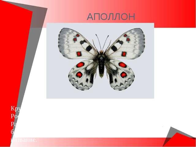 АПОЛЛОН Крупнейшая из древних бабочек. Обитает в Европейской части России, Се...