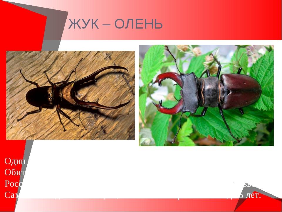 ЖУК – ОЛЕНЬ Один из крупных жуков .Длина тела самца 60 мм. Обитают на Северно...