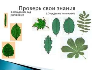 1.Определите вид жилкования 2.Определите тип листьев