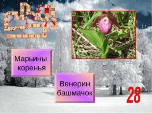 Венерин башмачок Марьины коренья