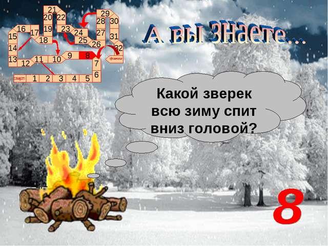 Какой зверек всю зиму спит вниз головой?