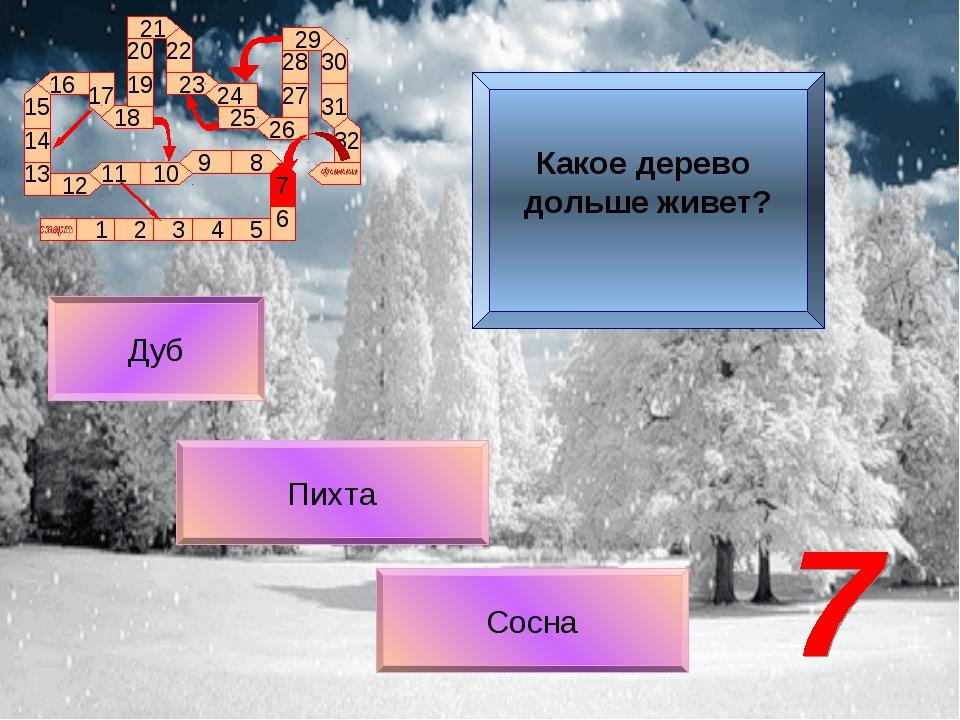 Сосна Дуб Пихта Какое дерево дольше живет?