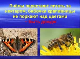 Пчёлы перестают летать за нектаром, бабочки крапивницы не порхают над цветами