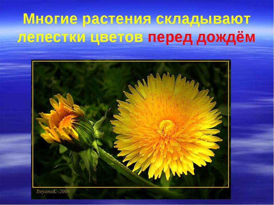 Многие растения складывают лепестки цветов перед дождём