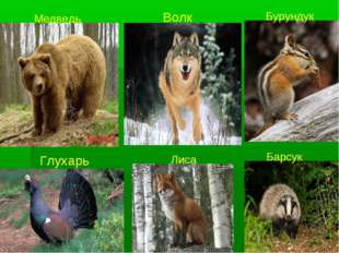 Медведь Волк Бурундук Глухарь Лиса Барсук