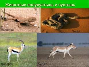 Животные полупустынь и пустынь Ящерица Змея Джейран Кулан