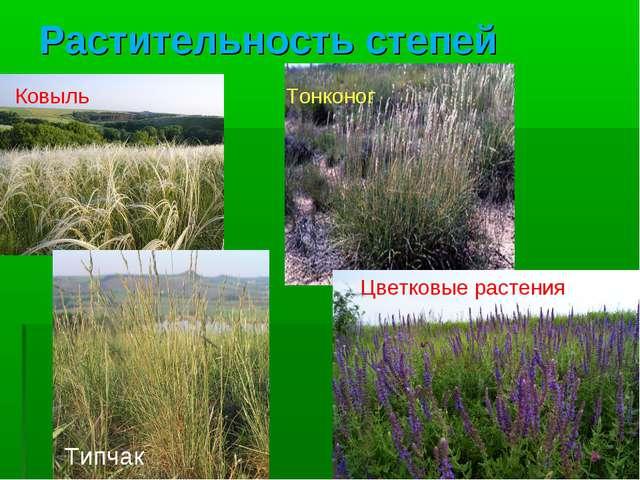 Растительность степей Ковыль Тонконог Типчак Цветковые растения
