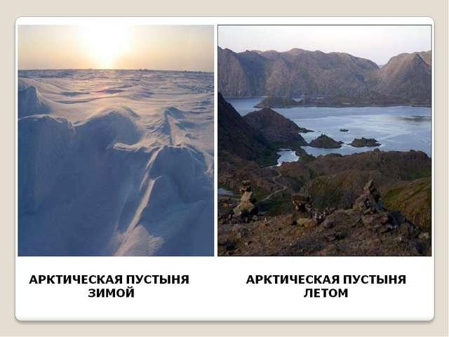 Практическая работа №2: «Передвижение по стеблю органических веществ» тюлень.