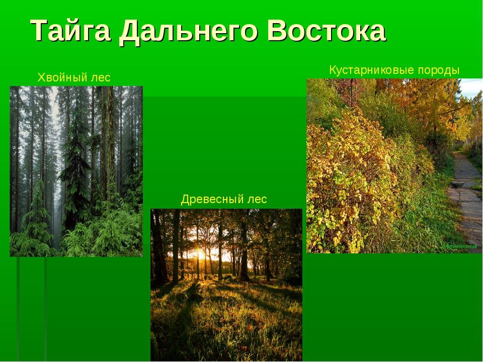 Тайга Дальнего Востока Мхи Хвойный лес Древесный лес Кустарниковые породы