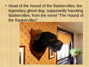 Head of the hound of the Baskervilles, the legendary ghost dog, supposedly ha