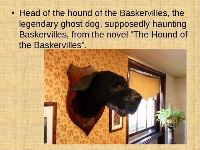Head of the hound of the Baskervilles, the legendary ghost dog, supposedly ha...