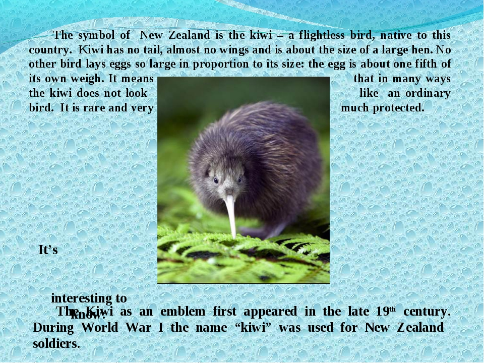 The symbol of New Zealand is the kiwi – a flightless bird, native to this cou...