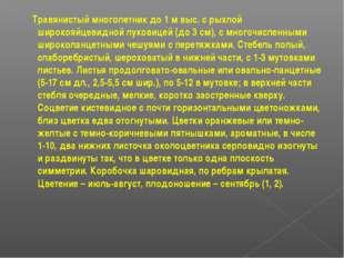 Травянистый многолетник до 1 м выс. с рыхлой широкояйцевидной луковицей (до