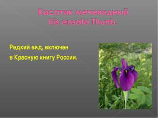 Редкий вид, включен в Красную книгу России.