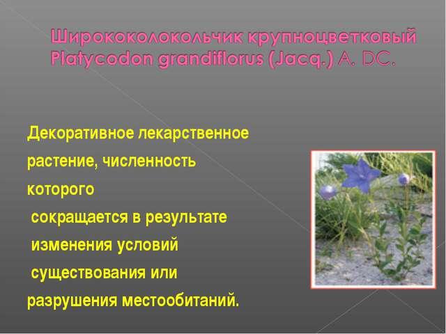 Декоративное лекарственное растение, численность которого сокращается в резу...