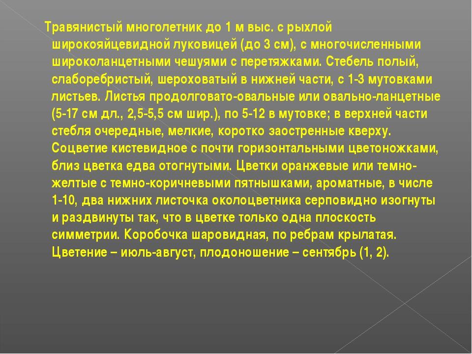 Травянистый многолетник до 1 м выс. с рыхлой широкояйцевидной луковицей (до...