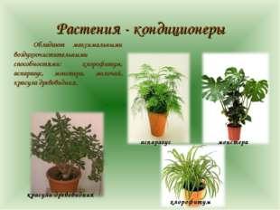 Растения - кондиционеры Обладают максимальными воздухоочистительными способн