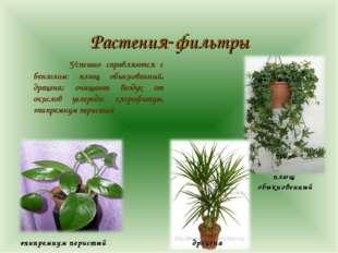 Растения-фильтры  Успешно справляются с бензолом: плющ обыкновенный, драцен
