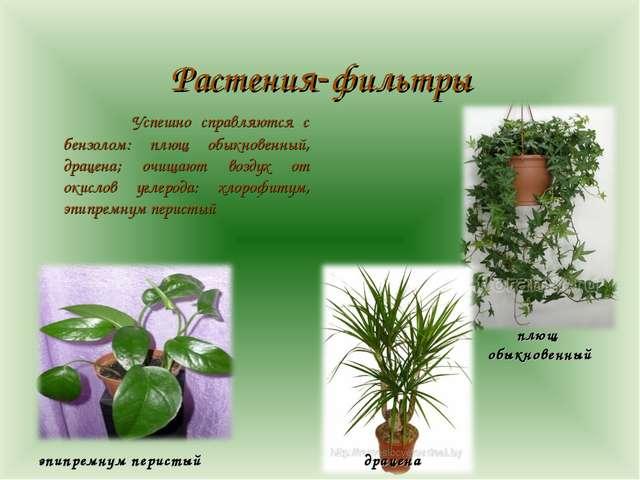 Растения-фильтры  Успешно справляются с бензолом: плющ обыкновенный, драцен...