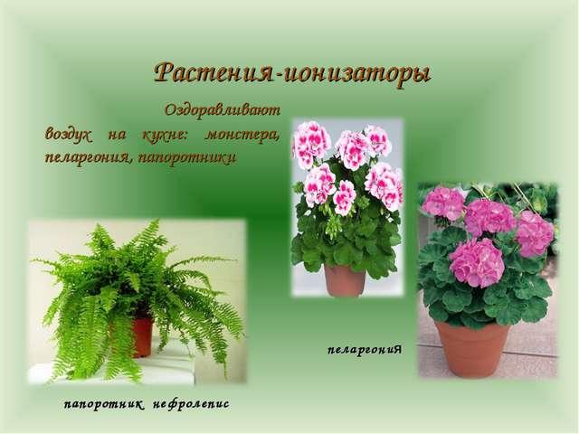 Растения-ионизаторы Оздоравливают воздух на кухне: монстера, пеларгония, па...
