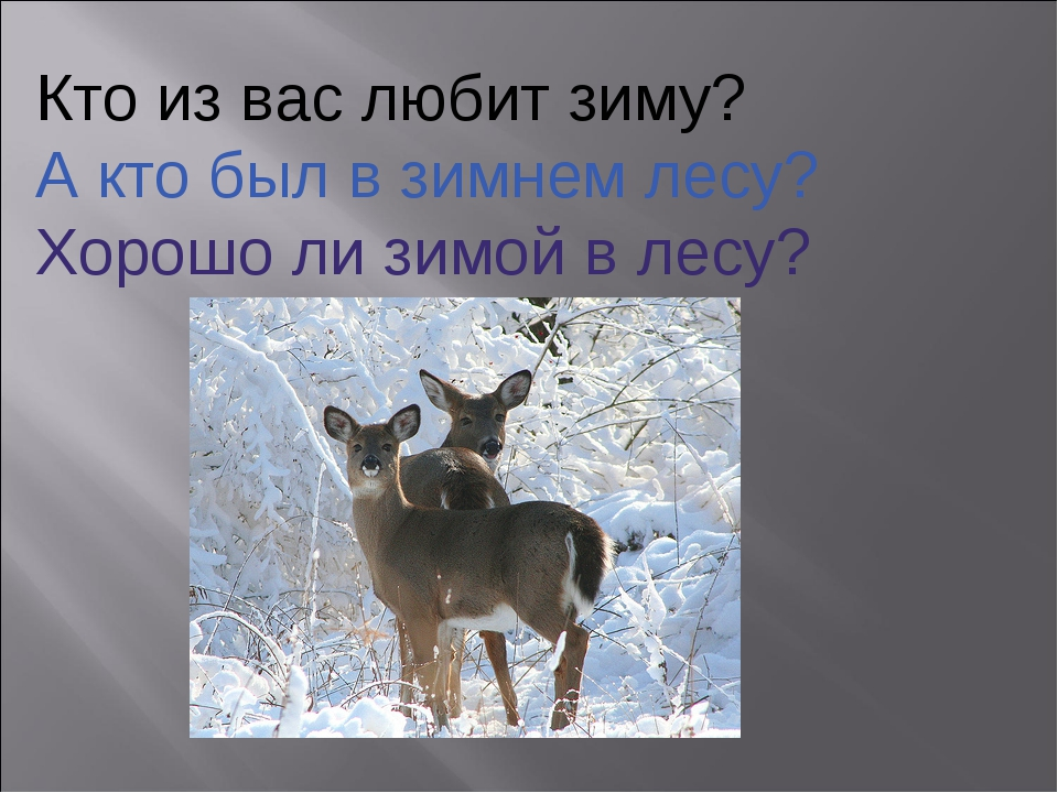 Кто из вас любит зиму? А кто был в зимнем лесу? Хорошо ли зимой в лесу?