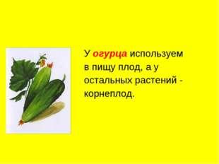 У огурца используем в пищу плод, а у остальных растений - корнеплод.