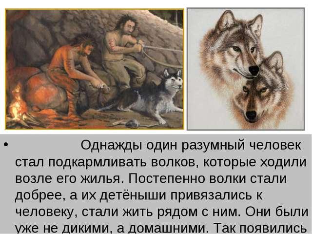 Однажды один разумный человек стал подкармливать волков, которые ходили воз...