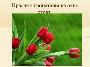 Красные тюльпаны на окне стоят