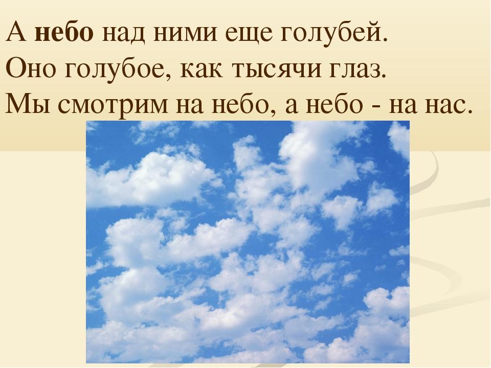 А небо над ними еще голубей. Оно голубое, как тысячи глаз. Мы смотрим на небо...