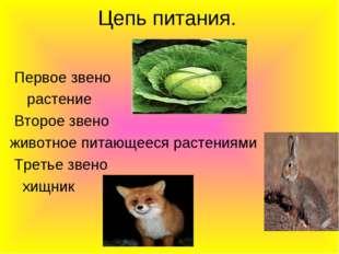 Цепь питания. Первое звено растение Второе звено животное питающееся растения