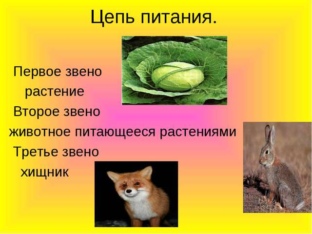 Цепь питания. Первое звено растение Второе звено животное питающееся растения...