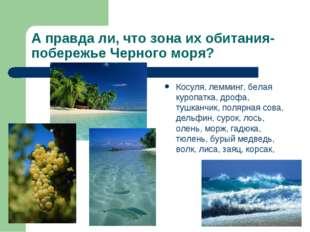 А правда ли, что зона их обитания- побережье Черного моря? Косуля, лемминг, б