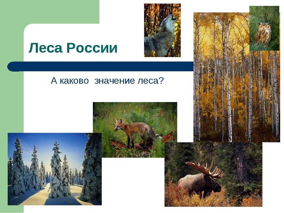 Леса России А каково значение леса?