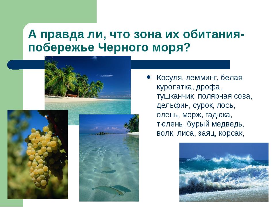 А правда ли, что зона их обитания- побережье Черного моря? Косуля, лемминг, б...