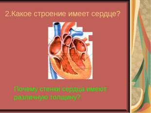 2.Какое строение имеет сердце? Почему стенки сердца имеют различную толщину?