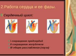2.Работа сердца и ее фазы. Сердечный цикл: I сокращение предсердий II сокраще