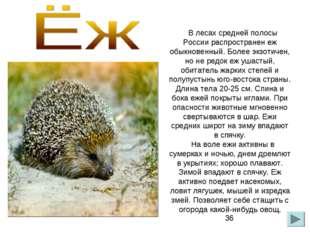 В лесах средней полосы России распространен еж обыкновенный. Более экзотичен,