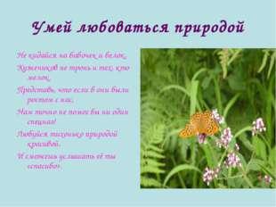Умей любоваться природой Не кидайся на бабочек и белок, Кузнечиков не тронь и