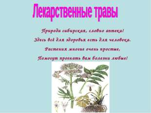 Природа сибирская, словно аптека! Здесь всё для здоровья есть для человека. Р