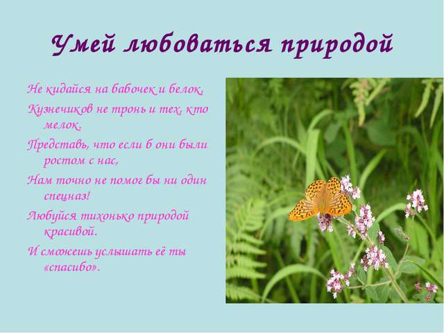 Умей любоваться природой Не кидайся на бабочек и белок, Кузнечиков не тронь и...