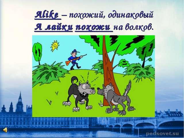 Alike – похожий, одинаковый А лайки похожи на волков.